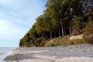 Nøgenvandretur i eventyrlig skov langs Østersøen @ Tohøjgaard Bed & Breakfast | Stege | Danmark