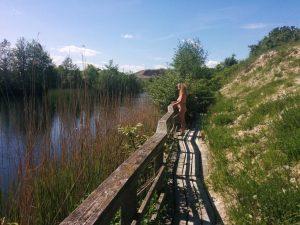 Naturist-event på Fyn den 8.-10. juli 2016 @ MC - Camp Fyn | Ringe | Danmark