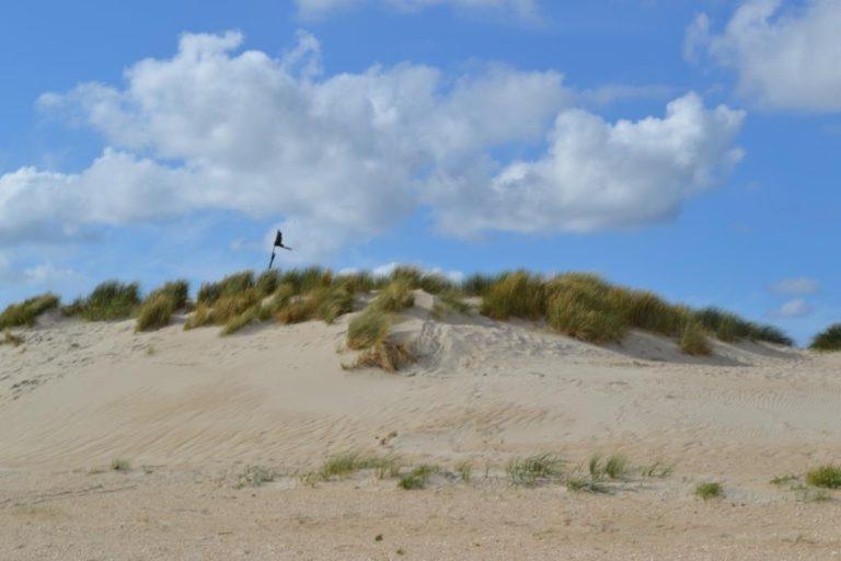 Rømø ø-tur - Danske Naturister